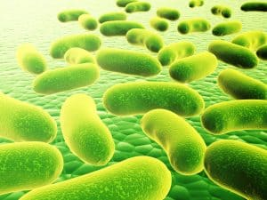 healthy bacteria in the mouth